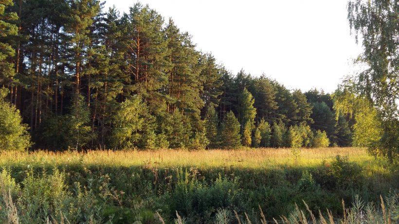 Сосны,река,поле. Цена 4.250.000р.